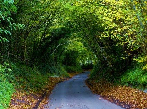 Hobbit Tree Tunnel, Dancersend, England
